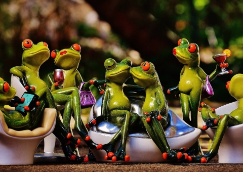 Praev party frogs pixabay